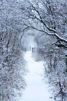 Winter Path ❤️