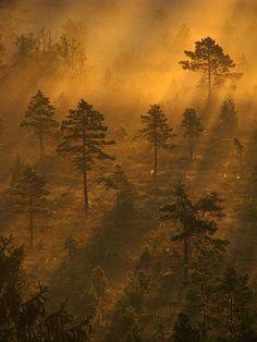 Sunrise in Torronsuo, Finland  photo by Suensyan