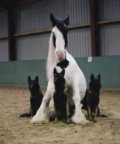 so adorable, probably been together forever. Horses And Dogs, Animals And Pets, Funny Animals, Cute Animals, Big Horses, Horse Pictures, Animal Pictures, Draft Horses, Horse Love