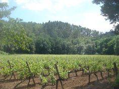 La vigne #sun #tourismepaca #seasnowsun #provencal #tourismpaca #tourismepaca #vin #wine #oenotourisme #vitivinicole #vigne #raisins #grapes