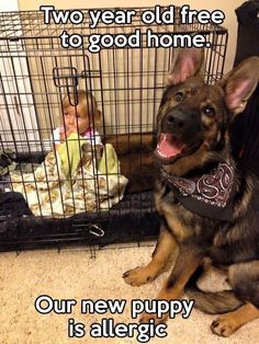 Must Love German Shepherds
