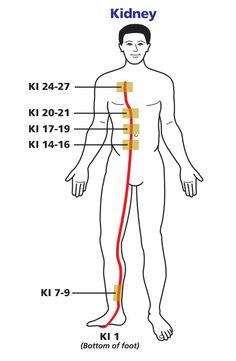 Kidney Meridian Chart by Wellbrocks © 2017 copyright, Pam Wellbrock. All rights reserved. Acupressure Points Chart, Acupressure Therapy, Acupressure Treatment, Cupping Therapy, Acupuncture Points, Massage Therapy, Meridian Acupuncture, Acupuncture Benefits, Meridian Points