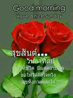 Good Morning, Sunday, Nice, Flowers, Plants, Dil Se, Respect, Gallery, Buen Dia