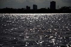 Patrimônio do Recife, Parque dos Manguezais está esquecido | IG Pernambuco | Leiaja