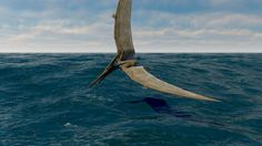 Image result for illustrations of pteranodons