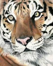 Resultado de imagen para imagenes de animales salvajes