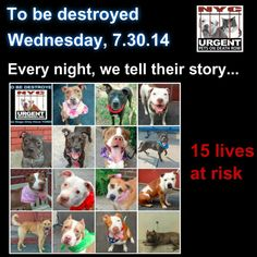 15 beautiful lives needs out help to give them a future. Please share everywhere. We only have tonight to give them the rest of their lives. To rescue a Death Row Dog, Please read this: http://urgentpetsondeathrow.org/must-read/ To view the full album, please click here: https://www.facebook.com/media/set/?set=a.611290788883804.1073741851.152876678058553&type=3