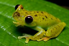 Central America Reptiles and Amphibians