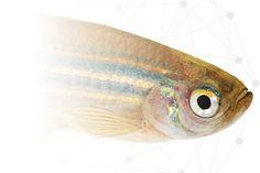 Shop - aquarium pump #YouAqua #Aquarium #Aquariumhobby #aquariumfish #aquariumsupplies Aquarium Pump, Aquarium Fish, Aquarium Supplies, Shop, Animals, Animales, Animaux, Fish Tank Accessories, Animal Memes