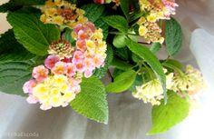 Ramito de flores de Mar del Plata en diciembre.