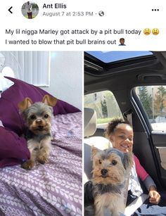 """Marley was killed by a pit bull. She was only 2 lbs. The pit bull was allowed to run loose, as its stupid owner told neighbors, """"He don't bite."""""""