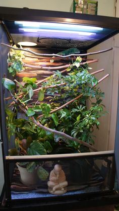 Chameleons are loners. Therefore, only one animal should be kept in the chameleon cage at home. In this article, we will share veiled chameleon cage ideas. Gecko Habitat, Reptile Habitat, Reptile Room, Reptile Cage, Chameleon Terrarium, Gecko Terrarium, Reptile Terrarium, Chameleon Care, Veiled Chameleon