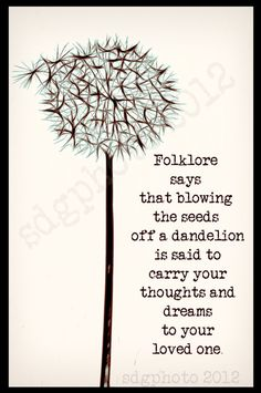 Dandelion Folklore Print 8x10 Botanical Print by sdgphoto on Etsy, $25.00