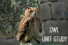 Owl Unit Study - Homeschooling - A Spectacled Owl use with The Tale of Solomon Owl Science Experiments Kids, Teaching Science, Teaching Kids, Science Art, Owl Activities, Owl Pellets, Homeschool Curriculum, Homeschooling, Nocturnal Animals