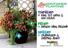 #containergardening using grasses, begonia, calibrachoa, creeping jenny #terrehaute #applehouse #flowerpots