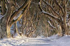the-dark-hedges-stranocum-county-antrim---winter (800×533)