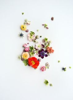 Floral Wall Sticker Decal!