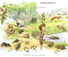 Zoekkaart Zoogdieren 1 Fauna, Animals For Kids, Amazing Nature, Ecology, Ark, The Great Outdoors, Mammals, Mother Nature, Illustration