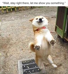 24 Funny Animal Memes And Pictures Of The Day