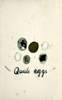 Some Quail's eggs, Katt Frank