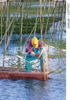 海苔養殖の作業