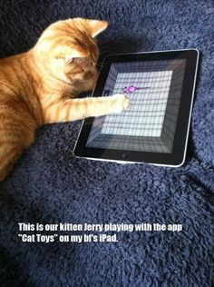 Family pet has it's own iPad?