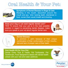 Pet oral health infographic from Petplan Pet Insurance (Australia).