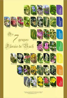 poster florais de bach 7 grupos - frete grátis laminado a-3 Chestnut Bud, White Chestnut, Clematis, Bola Medicinal, Aspen, Reiki, Bach Flowers, Rock Rose, Moon Child