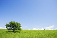 Two Trees in an Open Field - Wall Mural & Photo Wallpaper - Photowall