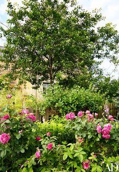 A rose-filled garden bed.