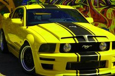 2009 UBBMUSTANG.COM