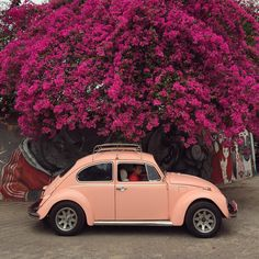 #vw #vwbeetle #peach & #pink #streetscene #strolling around #chiangmai #travel #thailand by __masl__