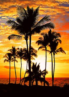 lifeisverybeautiful: Red Hot Sunset (by janruss)Hawaii