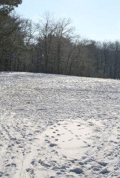 winter in Bilthoven