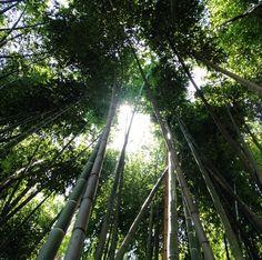 Bamboo Gardens at the Huntington Library Huntington Library, Bamboo Garden, Things To Do, Gardens, Things To Make, Outdoor Gardens, Garden, House Gardens