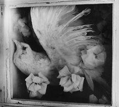 Clarence John Laughlin.  Bird of Death Dream (1953)