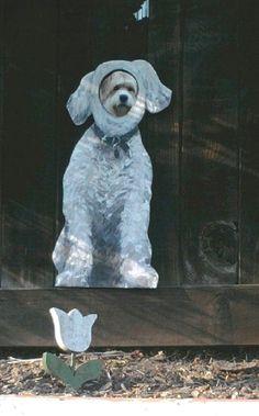 painted dog peep hole on fence. genius!