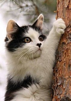 Adorable kitten.... Relax with this nature photo. #Relax more with this #free #music with #BinauralBeats that can #heal you. #landscaping #LandscapingIdeas #landscapeDesign
