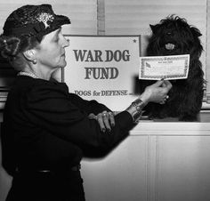 "FDR's cousin Laura Franklin ""Polly"" Delano and Fala, the president's Scottish Terrier, photographed in 1943 for the ""Dogs for Defense"" Bond Drive. Colonel, Franklin Delano, Anatole France, Old Photos, Vintage Photos, War Dogs, Scottish Terriers, Dog Rules, Vintage Dog"