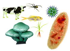 Wonderful Living Organisms and Animal Life
