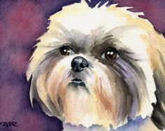 Shih Tzu Dog Watercolor Painting 8 X 10 Art Print Signed by Artist DJR for sale online Shih Tzu Hund, Shih Tzu Puppy, Shih Tzus, Watercolor Animals, Watercolor Paintings, Watercolor Paper, Watercolors, Abstract Watercolor, Dog Signs