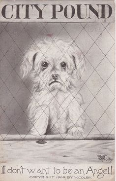 I Don't Want To Be An Angel- 1900s Antique Postcard- City Pound- Sad Orphan Puppy- Vincent V Colby- Artist Signed- Paper Ephemera- Used