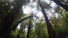 Naturaleza y Voluntariado Ambiental: Un tesoro verde, en riesgo en Chile