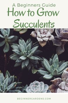 Wondering how to grow succulents? Look no farther. Succulents are one of the easiest plants to grow. Use this article to learn about how to grow succulents indoors. Types Of Succulents, Growing Succulents, Planting Succulents, Gardening For Beginners, Gardening Tips, Gardening Supplies, Succulent Wall Art, Succulent Ideas, Easy Plants To Grow