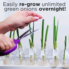 Amazing, I love this green onions - Cuidado de plantas - Plants Garden Yard Ideas, Garden Crafts, Garden Projects, Garden Landscaping, Indoor Garden, Landscaping Borders, Indoor Plants, Growing Vegetables, Growing Plants
