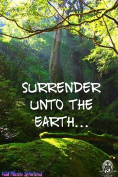 Mother Earth, Mother Nature, Forest Quotes, Male Witch, Pantheism, Native American Wisdom, Tattoo Signs, River I, Female Hero