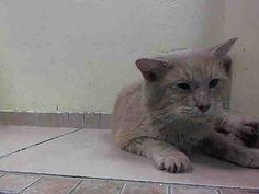 www.PetHarbor.com pet:NWYK1.A1025800