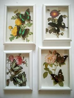 Real butterflys in frames