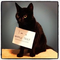 Cat Shaming » Also Into Cats - For the love of the internet!
