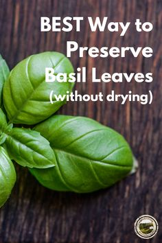How to preserve Basil so it still tastes fresh months later. The best way to store fresh Basil is to freeze in ice cube trays. Pop a frozen Basil cube out to season recipes. #basil #preserveherbs #freeze #recipes Storing Fresh Basil, Freezing Basil, Preserving Basil, How To Make Sauce, Smoked Fish, Fish And Meat, Emergency Food, Dehydrated Food, Herbs Indoors